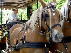 chevaux avec grelot